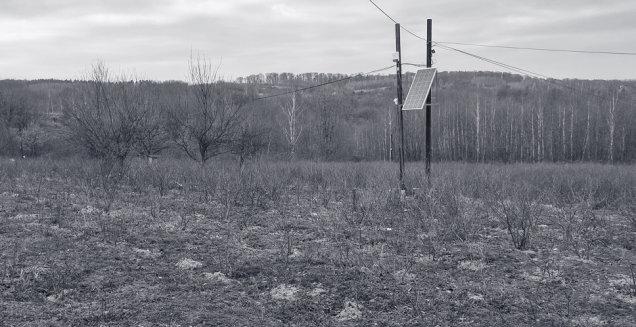 Zabezpieczenie plantacji borówki amerykańskiej